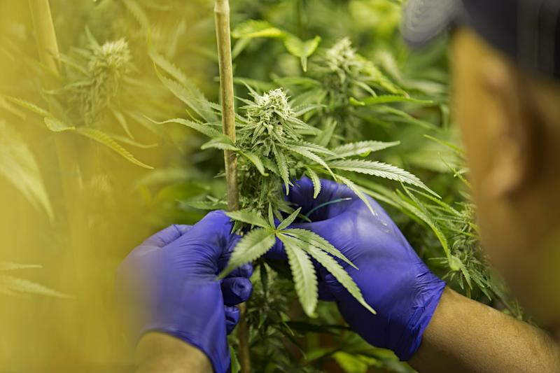 How Colorado's Booming Marijuana Industry Is Helping Fight Homelessness and Drug Addiction