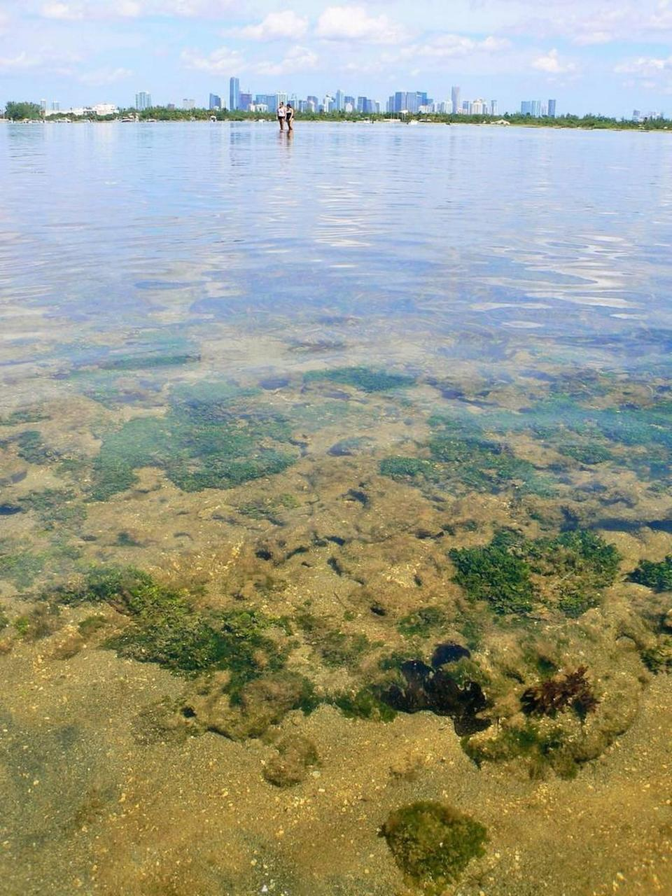 Nutrient pollution is increasing algae blooms and contributing to a decline in seagrass meadows in Biscayne Bay.