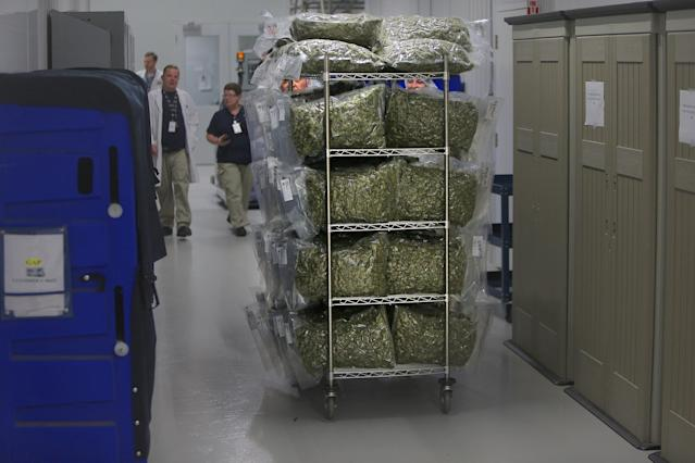 SMITHS FALLS, ONTARIO - MAY 15: A cart full of bagged marijuana is rolled through the corridors at the Canopy Growth Corporation headquarters in Smiths Falls, Ontario, on May 15, 2019. Canada has recently legalized recreational marijuana. (Photo by Lane Turner/The Boston Globe via Getty Images)