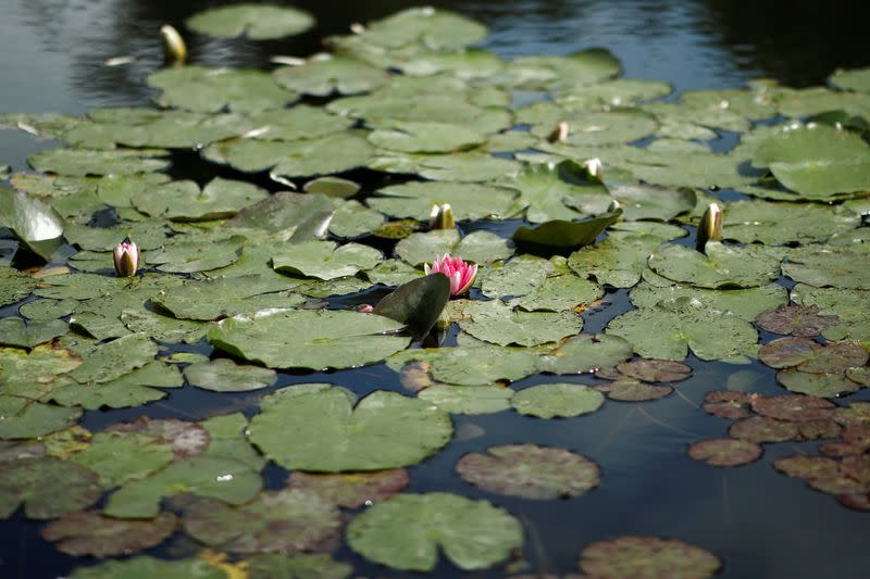 Locals savour Monet's gardens without the crowds