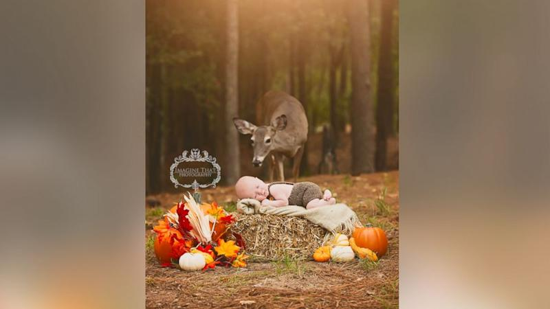 Deer Photobombs Baby's Photo Shoot