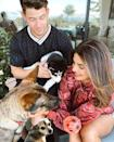 """<p>The Quantico actress shared that she had adopted an adorable new puppy with husband Nick Jonas. Already proud dog parents to Diana the chihuahua and Gino the german shepherd, their new addition is Panda, a Husky Australian Shepard mix. </p><p>Posing for a new family photo, the Chopra Jonas' Photoshopped in Diana so not to exclude her. Fair enough.<br></p><p><a href=""""https://www.instagram.com/p/CDoszLHD9_H/"""" rel=""""nofollow noopener"""" target=""""_blank"""" data-ylk=""""slk:See the original post on Instagram"""" class=""""link rapid-noclick-resp"""">See the original post on Instagram</a></p>"""