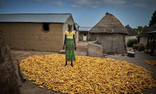'A child cannot learn on an empty stomach': tackling Ghana's crop crisis