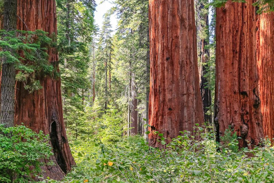 Big Trees State Park in Calaveras County, California.