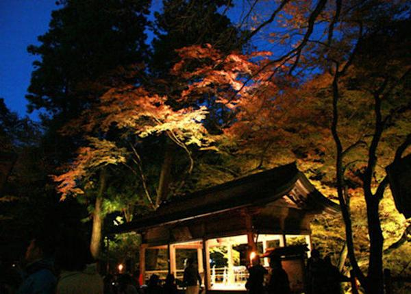 ▲ The beauty of the illumination of the autumn colors along the path leading to the rear shrine as well as each of the shrines is timeless and unforgettable.