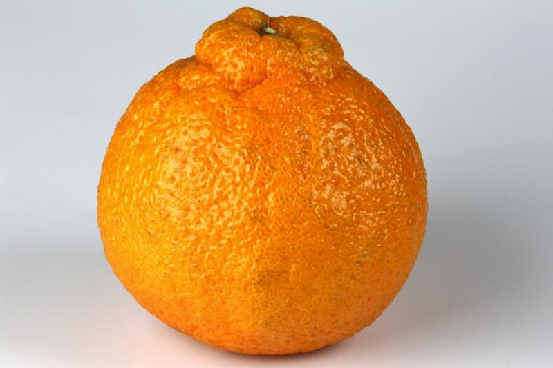 Or sometimes known as a Sumo Mandarin Orange