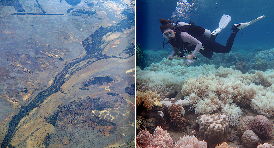 The Murray Darling River from above (left) and the Great Barrier Reef showing a diver and coral bleaching(right).