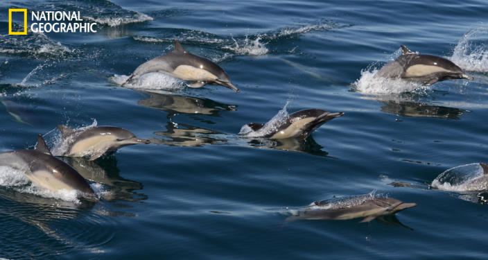 """Dolphins cruising along our whale watching boat in the Monterey Bay. Taken February 15, 2013. (Photo and caption Courtesy Kate Cummings / National Geographic Your Shot) <br> <br> <a href=""""http://ngm.nationalgeographic.com/your-shot/weekly-wrapper"""" rel=""""nofollow noopener"""" target=""""_blank"""" data-ylk=""""slk:Click here"""" class=""""link rapid-noclick-resp"""">Click here</a> for more photos from National Geographic Your Shot."""