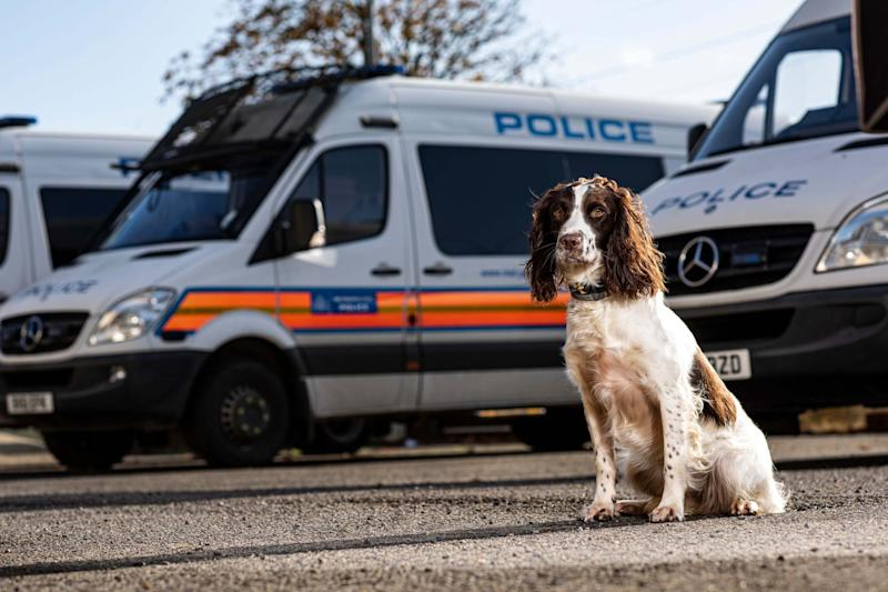 Police dog Bolly used her incredible sense of smell to locate a paedophile's laptop: Daniel Hambury/@stellapicsltd