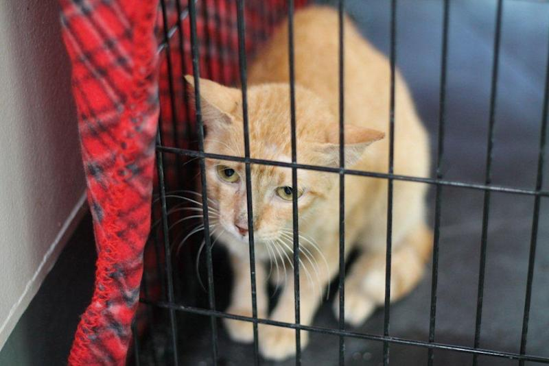 Cat found on freighter from Philippines to LA