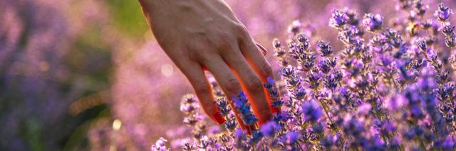 Woman touching lavender flowers.