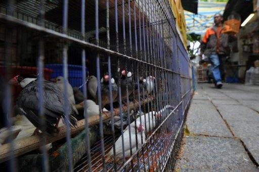 Hong Kong officials said the boy was in serious condition after testing positive for the H5N1 strain of avian influenza