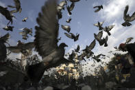 Pigeons fly outside the Shah-Do Shamshira Mosque in Kabul, Afghanistan, Tuesday, July 20, 2021. Friday marks the major Muslim holiday Eid al-Adha at the end of the hajj pilgrimage to Mecca, which is observed around the world by believers and commemorates prophet Abraham's pledge to sacrifice his son as an act of obedience to God. (AP Photo/Rahmat Gul)