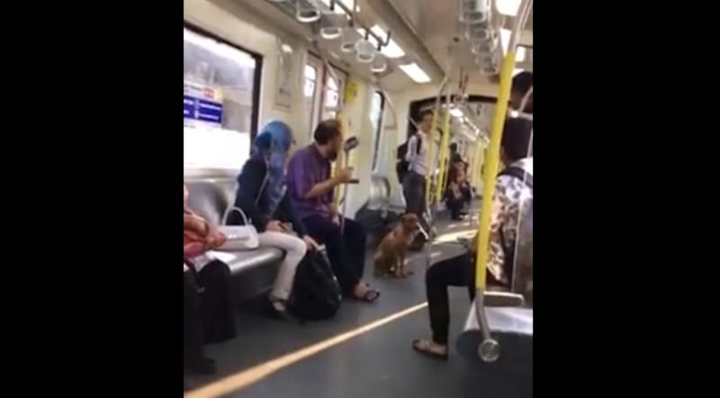 The stray dog scurried into the 8.24am train at the LRT Miharja Station yesterday. ― Screengrab via Facebook/Elyana Nadia