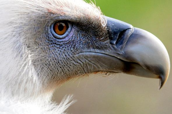 Vultures eat woman who fell from cliff in France