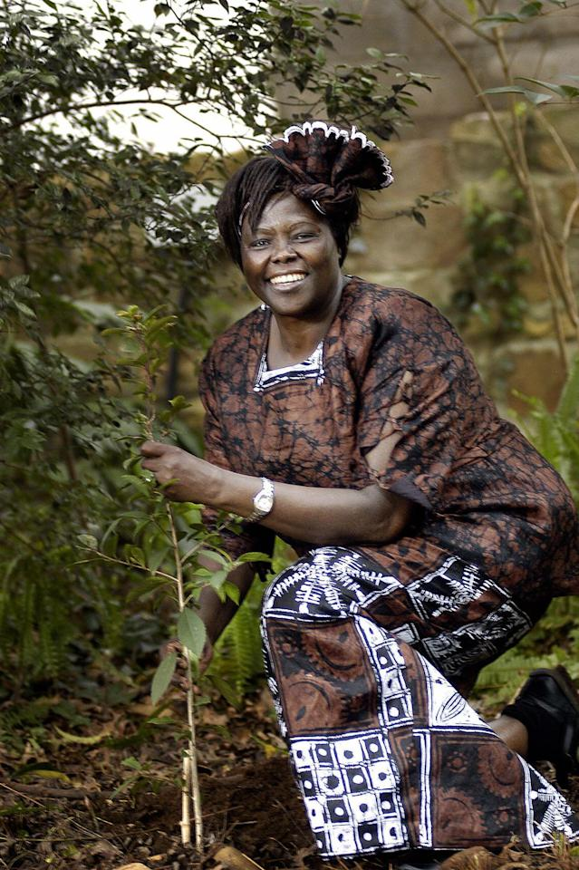 """<p>Wangari Maathai became the first black woman to win the <a href=""""https://www.youtube.com/watch?v=dZap_QlwlKw"""" target=""""_blank"""">2004 Nobel Peace Prize </a>for her environmental work in Kenya. She was also the first woman in East and Central Africa to earn a doctorate degree. Maathai served as the chairman for six years on the National Council of Women in Kenya,<a href=""""https://www.nobelprize.org/prizes/peace/2004/maathai/biographical/"""" target=""""_blank""""> </a>and introduced the idea of accomplishing the largest tree-planting campaign in Africa—the Green Belt Movement. The organization <a href=""""https://www.greenbeltmovement.org/what-we-do/tree-planting-for-watersheds"""" target=""""_blank"""">has planted over 51 million trees</a> in Kenya since its founding in 1977. </p>"""