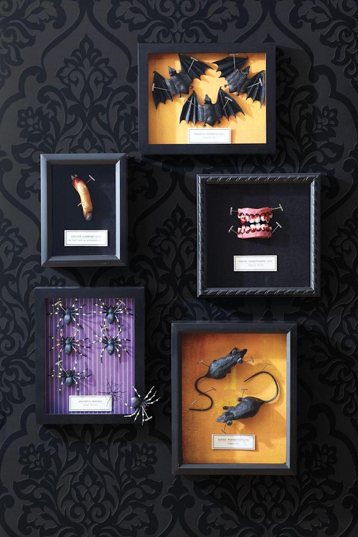 """<p>Shadowbox frames are transformed into displays of chilling curiosities. Just add whatever Halloween toys you can find — like teeth, fingers or spiders — to create a spooky scene.</p><p><a href=""""https://www.womansday.com/home/crafts-projects/how-to/a5972/craft-project-creepy-specimen-boxes-123857/"""" rel=""""nofollow noopener"""" target=""""_blank"""" data-ylk=""""slk:Get the Creepy Specimen Boxes tutorial."""" class=""""link rapid-noclick-resp""""><strong><em>Get the Creepy Specimen Boxes tutorial.</em></strong></a></p>"""