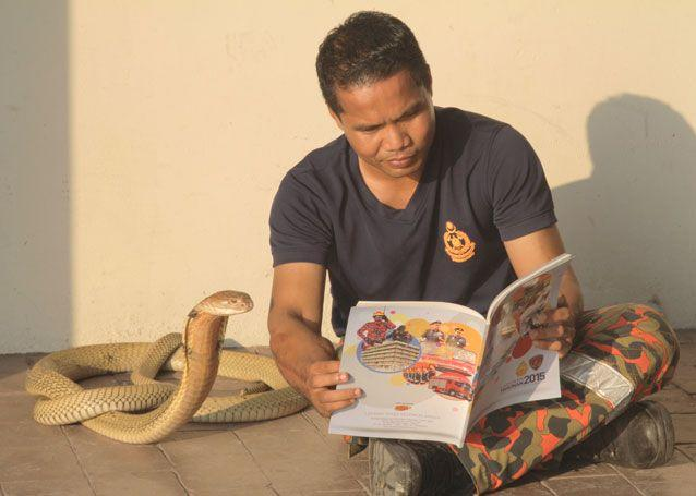 Mr Hussin reads to one of the king cobras. Source: Getty Images