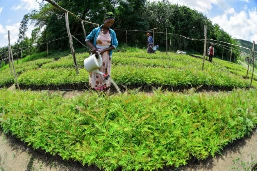 A thriving nursery in Buee in southern Ethiopia