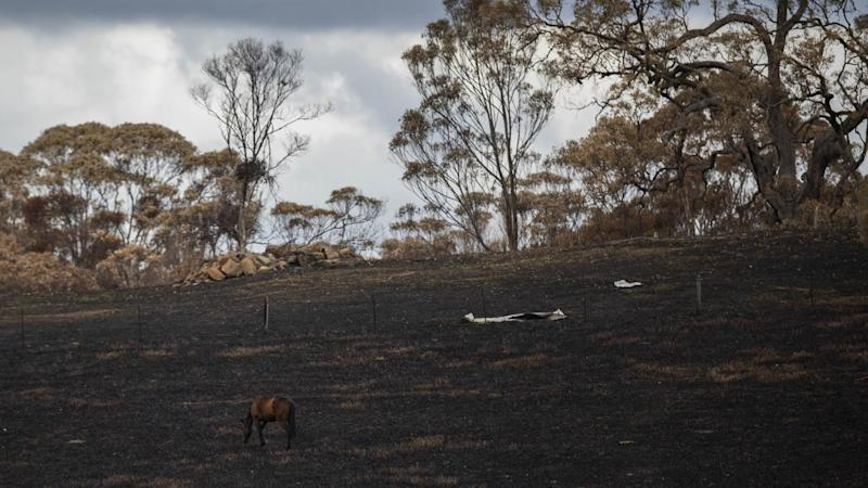 NSW authorities are preparing for forecast heavy rain in fire-affected areas of the state