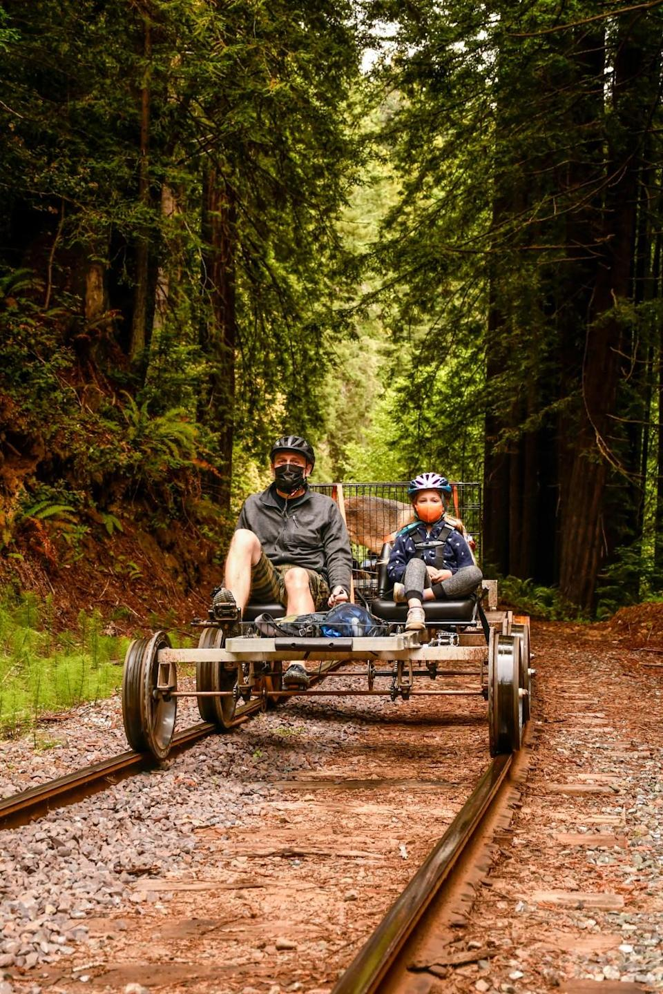 Two people on a railbike pedal through a redwood forest.