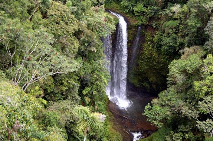 """<span class=""""caption"""">Forest near Sarayaku, Ecuador.</span> <span class=""""attribution""""><a class=""""link rapid-noclick-resp"""" href=""""https://flic.kr/p/3hBeBj"""" rel=""""nofollow noopener"""" target=""""_blank"""" data-ylk=""""slk:skifatenum"""">skifatenum</a>, <a class=""""link rapid-noclick-resp"""" href=""""http://creativecommons.org/licenses/by/4.0/"""" rel=""""nofollow noopener"""" target=""""_blank"""" data-ylk=""""slk:CC BY"""">CC BY</a></span>"""