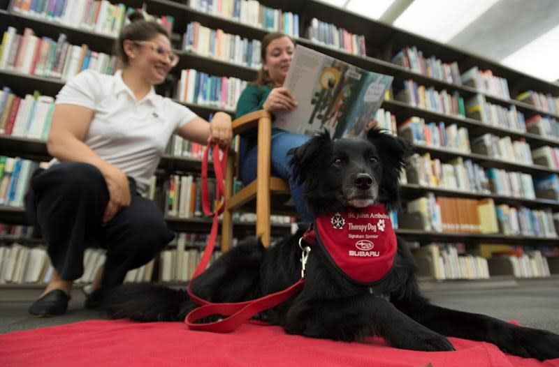 Vancouver library loans out dogs in poetry promotion for 15-minute outings