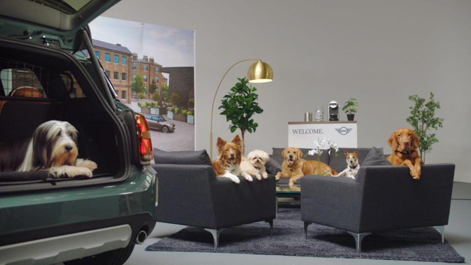 Mini and Dogs Trust