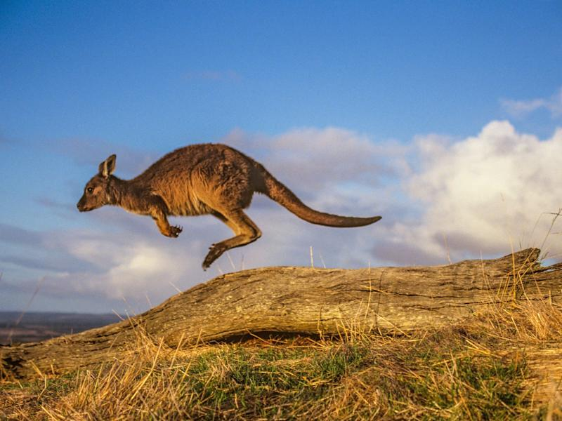 Goes to Kangaroo Island Once, Writes a Story About It