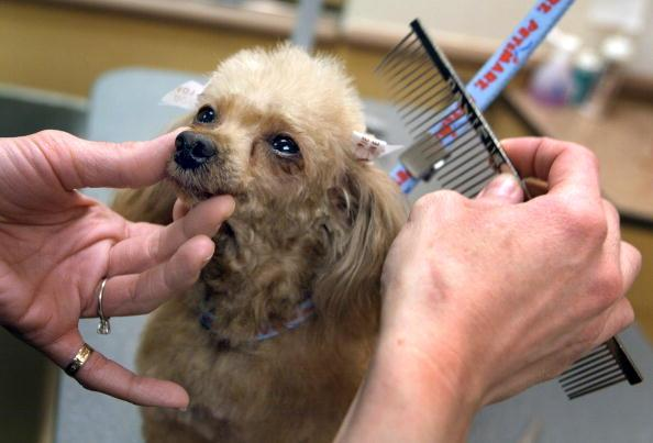 7 Ways to save on pet costs
