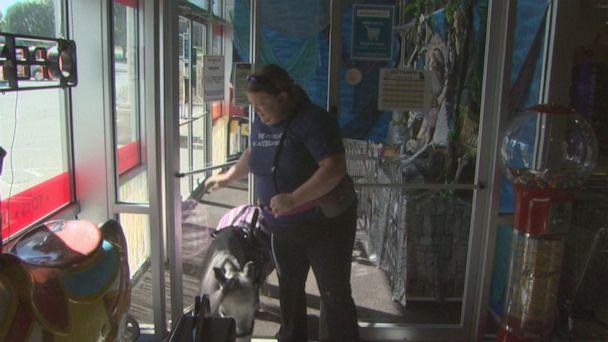 PHOTO: Abrea Hensley and her miniature therapy horse, Flirty are quite the sight. Whether at the grocery store or in the park, Flirty attracts a lot of attention. (ABC)