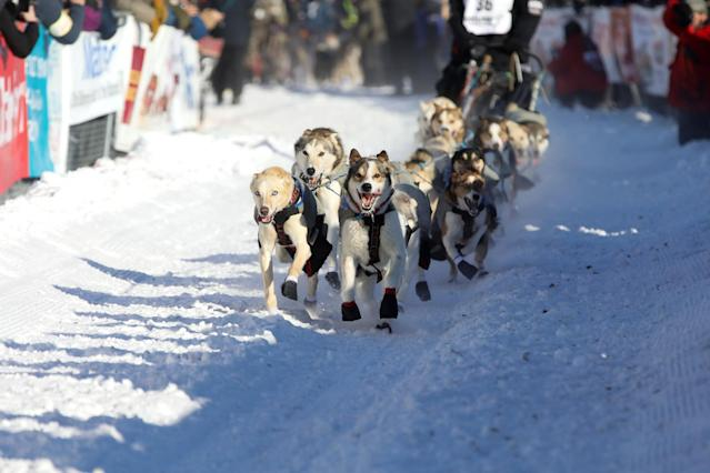 <p>Allen Moore's team competes in the official restart of the Iditarod, a nearly 1,000 mile (1,610 km) sled dog race across the Alaskan wilderness, in Fairbanks, Alaska, U.S. March 6, 2017. REUTERS/Nathaniel Wilder </p>