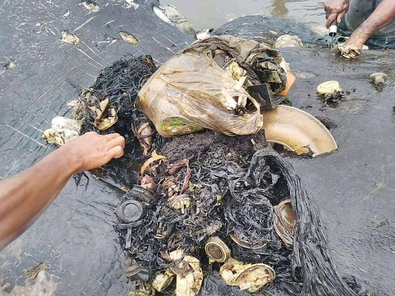Plastic items from a whale's belly are seen in Wakatobi