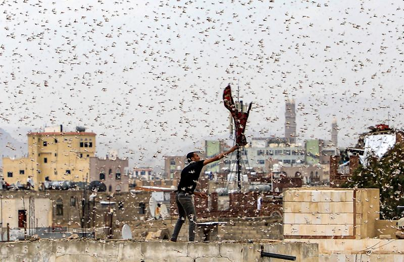TOPSHOT - A man tries to catch locusts while standing on a rooftop as they swarm over the Huthi rebel-held Yemeni capital Sanaa on July 28, 2019. (Photo by Mohammed HUWAIS / AFP) (Photo credit should read MOHAMMED HUWAIS/AFP via Getty Images)