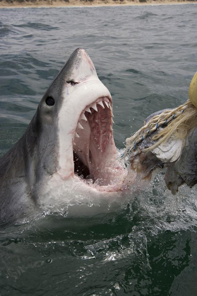 """A scene from """"<a href=""""/ultimate-air-jaws/show/46651"""">Ultimate Air Jaws</a>."""""""