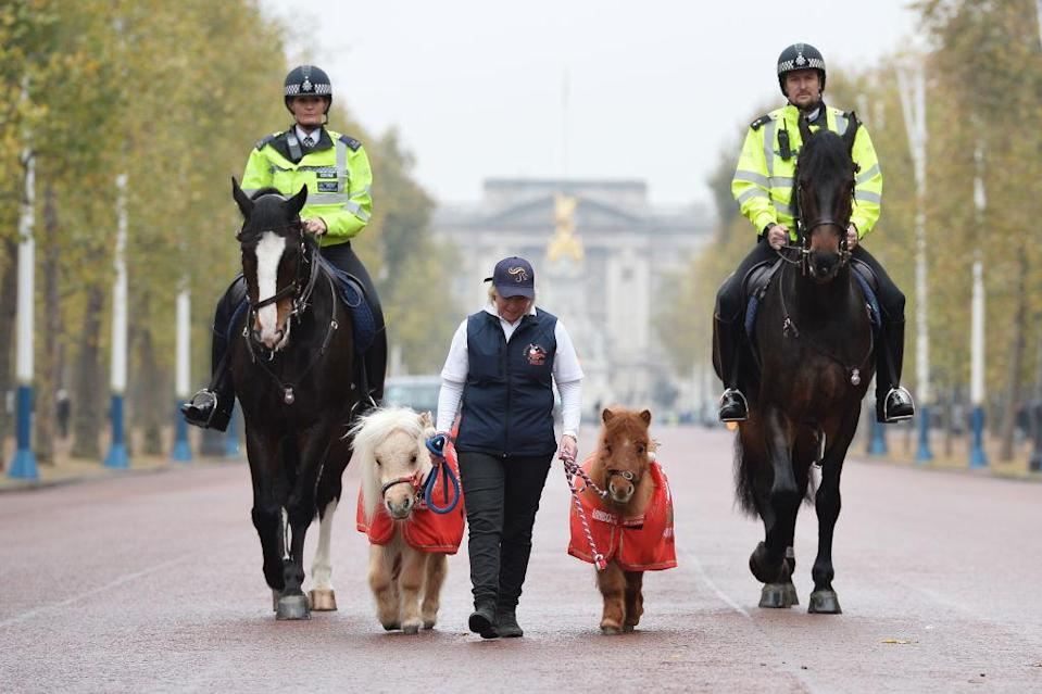 <p>Metropolitan Police (MPS) Horses, Merlin and Quixote, are joined on patrol in central London by some special helpers, miniature Shetland ponies Teddy and Doris, ahead of their appearances at Olympia's London International Horse Show at The Mall in London, England. (Jeff Spicer/Getty Images) </p>