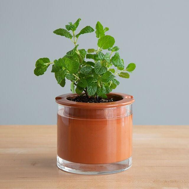 """<h2>Uncommon Goods Perfectly Watered Planter Pot</h2><br>Where old-fashion gardening meets high-tech gadgetry. You simply fill the """"glass reservoir"""" with water and the plant's roots do the rest! They soak up exactly what they need while you're left to appreciate your plant's beauty from afar — aka if you enjoy the look of plants but dislike the upkeep, this pot is for you. <br><br><em>Shop <strong><a href=""""http://uncommongoods.com"""" rel=""""nofollow noopener"""" target=""""_blank"""" data-ylk=""""slk:Uncommon Goods"""" class=""""link rapid-noclick-resp"""">Uncommon Goods</a></strong></em><br><br><strong>Uncommon Goods</strong> Perfectly Watered Plant Pot, $, available at <a href=""""https://go.skimresources.com/?id=30283X879131&url=https%3A%2F%2Fwww.uncommongoods.com%2Fproduct%2Fperfectly-watered-plant-pot"""" rel=""""nofollow noopener"""" target=""""_blank"""" data-ylk=""""slk:Uncommon Goods"""" class=""""link rapid-noclick-resp"""">Uncommon Goods</a>"""