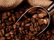 """A hotter climate and changing rainfall patterns as a result of global warming are affecting one of the world's most coveted forms of caffeine. A <a rel=""""nofollow noopener"""" href=""""http://www.climateinstitute.org.au/verve/_resources/TCI_A_Brewing_Storm_FINAL_WEB270916.pdf"""" target=""""_blank"""" data-ylk=""""slk:report"""" class=""""link rapid-noclick-resp"""">report</a> by the Climate Institute predicts that by 2050, the global area suitable for coffee production could be slashed in half. Coffee production is forecasted to move away from the equator, posing deforestation risk as well as more extreme weather conditions upslope that are likely unsuitable for mass coffee yields and expected quality. """"What we are really seeing as a company as we look 10, 20, 30 years down the road—if conditions continue as they are—is a potentially significant risk to our supply chain,"""" Jim Hanna, Director, Environmental Affairs at Starbucks, said in the report."""