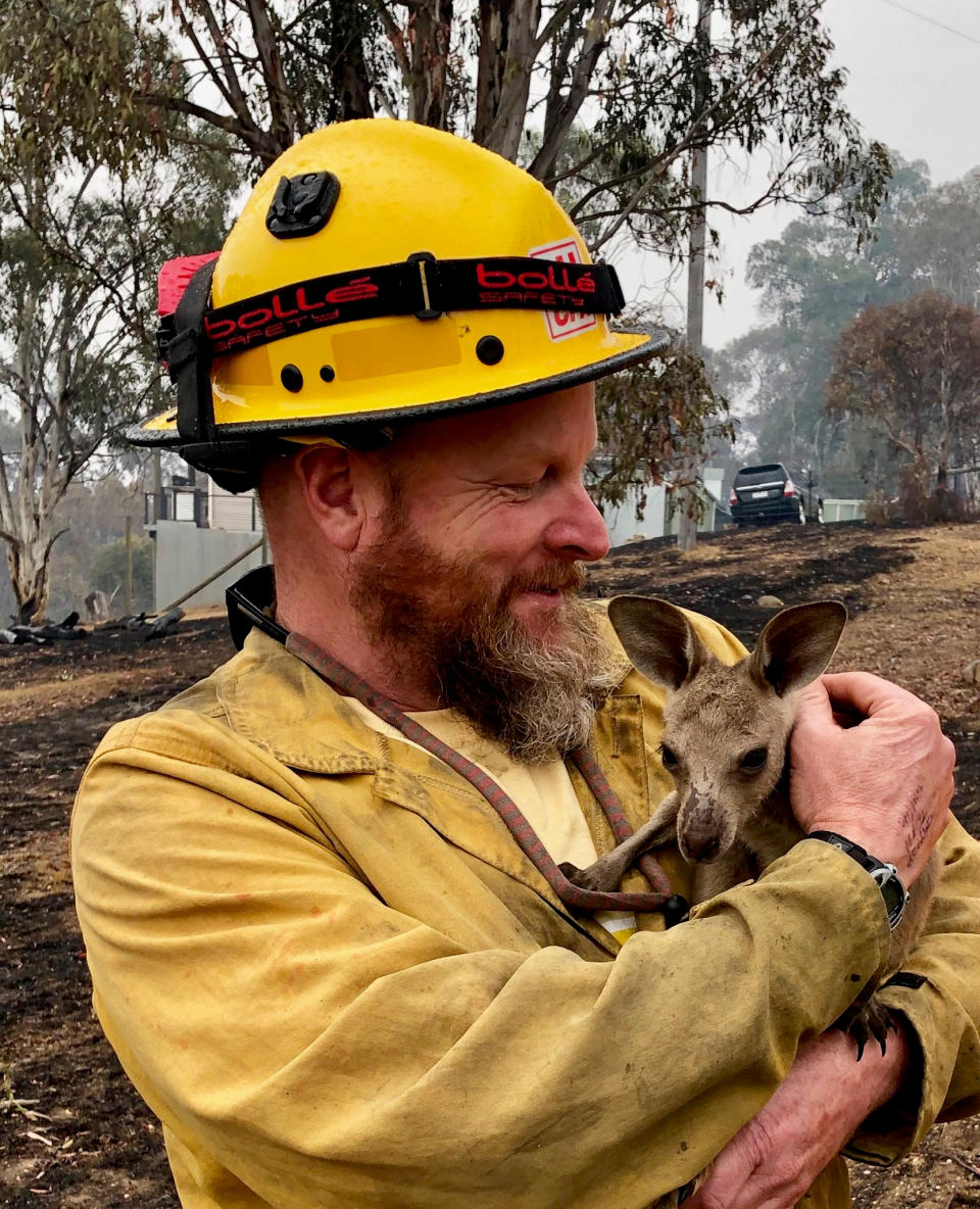 In this Jan. 5, 2020, photo provided by the United States Department of Agriculture Forest Service, Lake Tahoe Basin Management Unit Capt. Dave Soldavini holds a baby kangaroo that was rescued from a wildfire, in Cobrunga, Australia. The U.S. is planning to send at least 100 more firefighters to Australia to join 159 already there battling blazes that have killed 25 people and destroyed 2,000 homes. (Jeremy McMahon/Bureau of Land Management via AP)