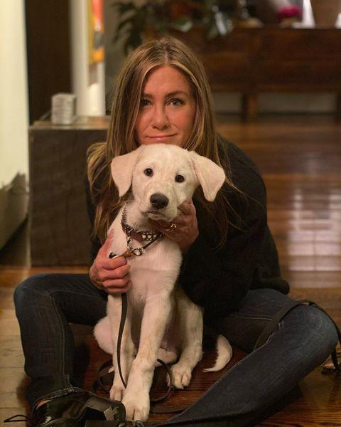 """<p>Sharing news of her new pup in October 2020, Jen An <a href=""""https://www.instagram.com/p/CGNQCJ3jX2h/"""" rel=""""nofollow noopener"""" target=""""_blank"""" data-ylk=""""slk:wrote"""" class=""""link rapid-noclick-resp"""">wrote</a>, """"Hi! I'd like to introduce to you the newest member of our 🐾 family….this is (a very tired) Lord Chesterfield ❤️. He stole my heart immediately. A HUGE thank you to @wagmorpets for the incredible work you do. Grateful you take such great care of these rescues and find them their forever homes🙏🏼"""" </p><p><a href=""""https://www.instagram.com/p/CIEI09eDtrX/"""" rel=""""nofollow noopener"""" target=""""_blank"""" data-ylk=""""slk:See the original post on Instagram"""" class=""""link rapid-noclick-resp"""">See the original post on Instagram</a></p>"""