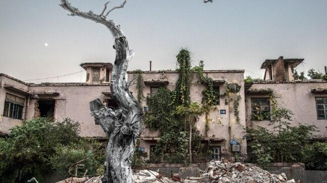 For photographer Juhi Saklani, chopping trees for 'redevelopment' is not just about the environment.