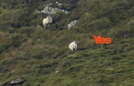 "A ""Yes"" placard sits on a hillside on the Isle of Lewis in the Outer Hebrides September 13, 2014. REUTERS/Cathal McNaughton"