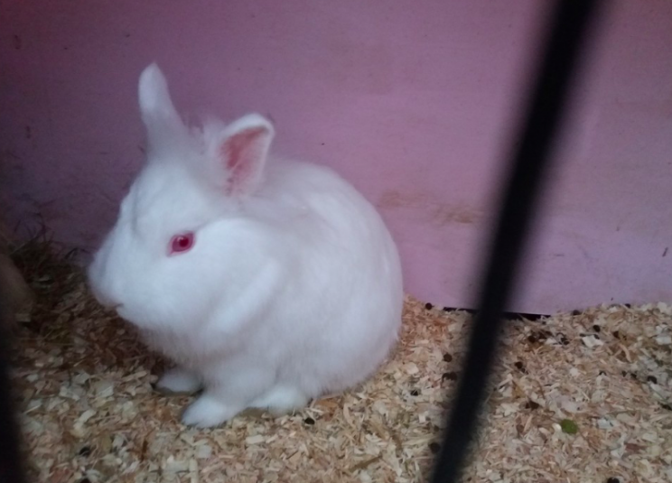 Safe: Lily is now back with her owner (RSPCA)