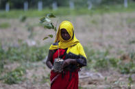 An Indian laborer prepares to plant saplings as part of an annual tree plantation campaign on the outskirts of Prayagraj, in northern Uttar Pradesh state, India, Sunday, July 4, 2021. (AP Photo/Rajesh Kumar Singh)