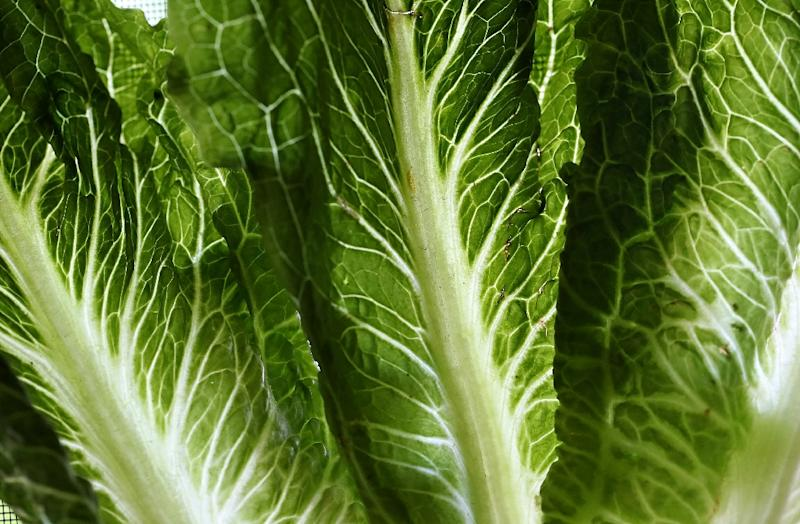 Avoid contaminated lettuce — ALERT