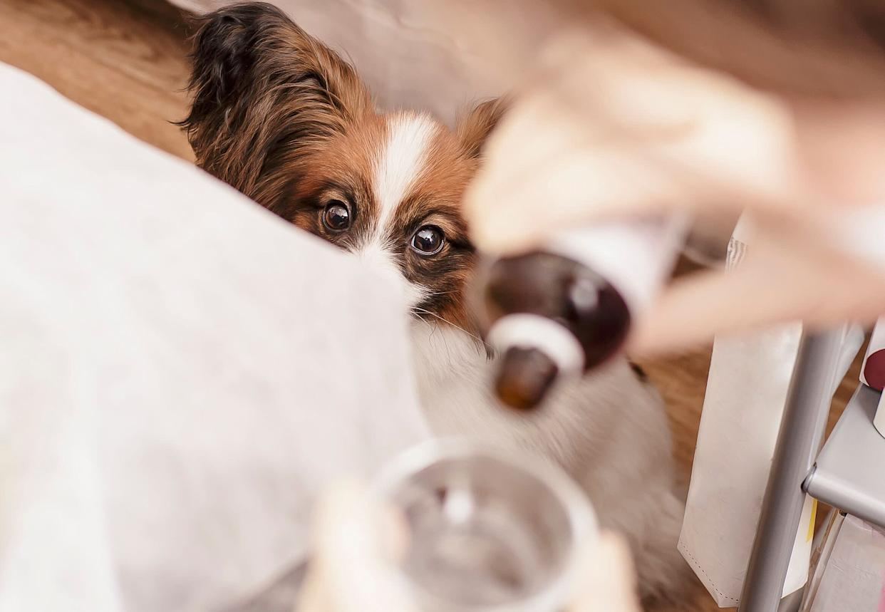 Will CBD calm an anxious pet during Fourth of July fireworks shows? We asked the experts. (Photo: koldunova via Getty Images)