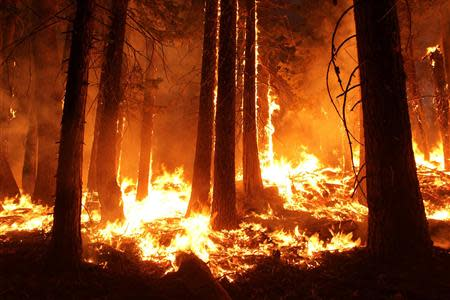 The Rim Fire burns at night in this undated United States Forest Service handout photo near Yosemite National Park, California, released to Reuters August 30, 2013. REUTERS/Mike McMillan/U.S. Forest Service/Handout via Reuters