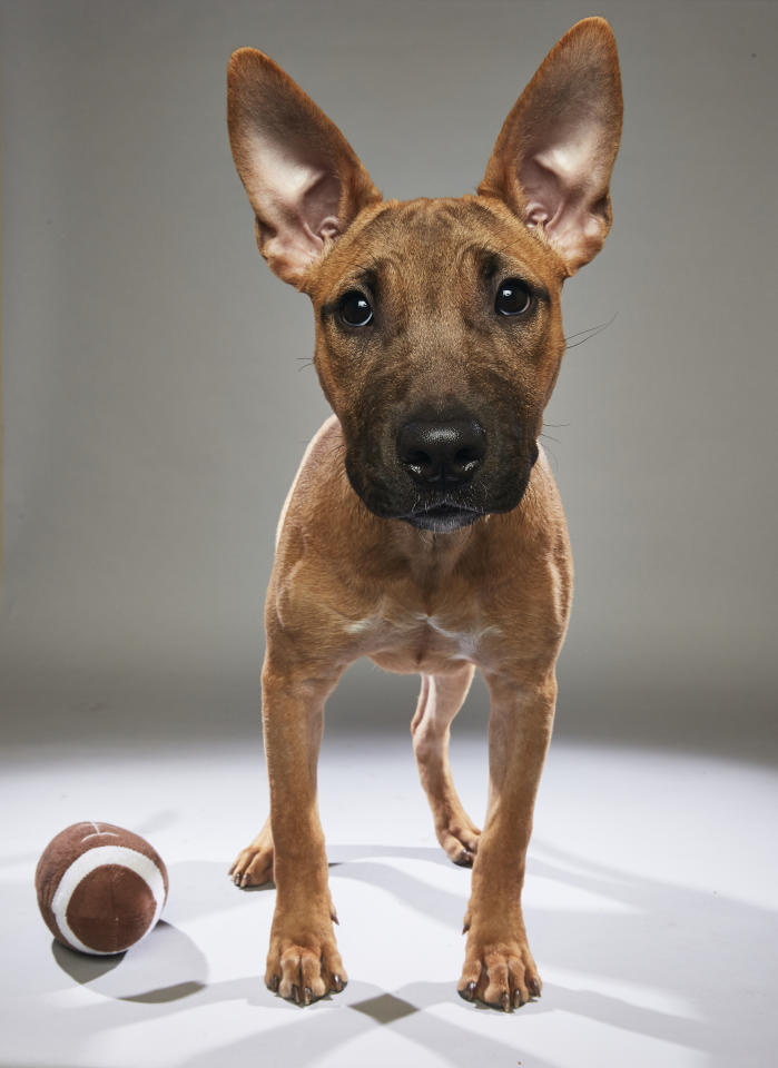 Team: Ruff<br /> From: Harley's Haven Dog Rescue<br /> (Photo: Animal Planet)