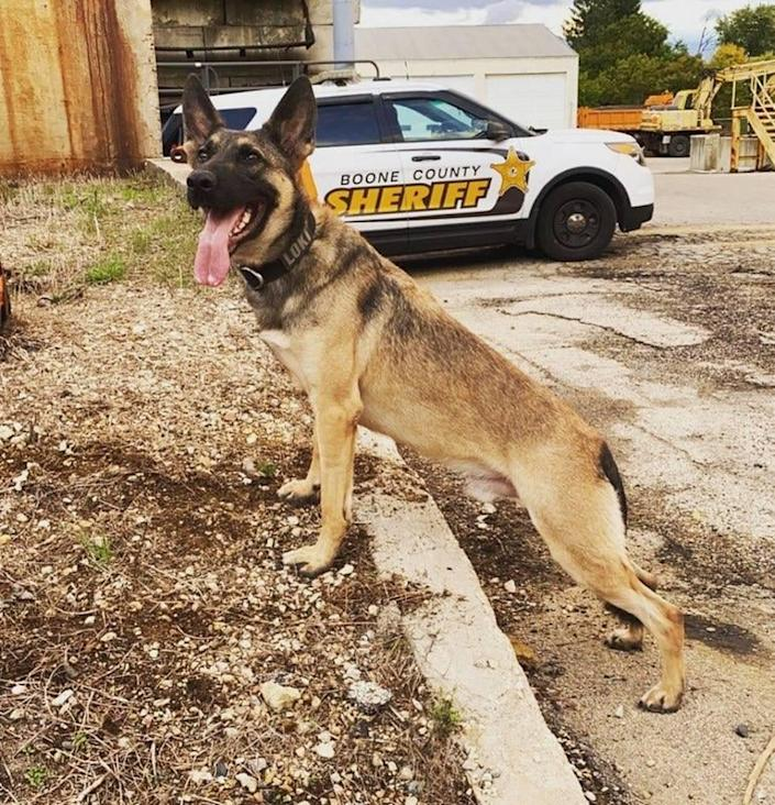 K9 Loki died after an accused drunk limo driver crashed into a stopped police car Sunday, Illinois police say.