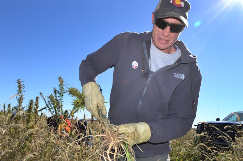 In this Oct. 5, 2013 file photo, Colorado farmer Ryan Loflin harvests hemp during the first known harvest of the plant in more than 60 years, on Loflin's farm in Springfield, Colo. The federal farm bill agreement reached Monday Jan. 27, 2014 reverses decades of prohibition for hemp cultivation. Instead of requiring approval from federal drug authorities to cultivate the plant, the 10 states that have authorized hemp would be allowed to grow it in pilot projects or at colleges and universities for research. (AP Photo/P. Solomon Banda, File)